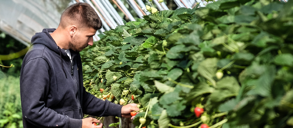 Seasonal Harvest Jobs in the UK with Accommodation