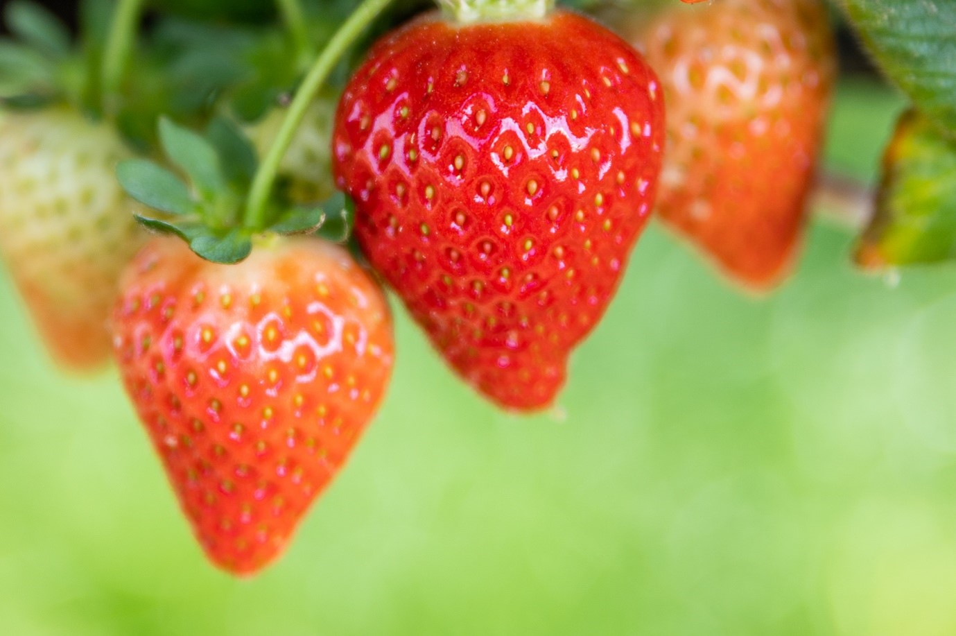 A Guide to British Fruit Growing